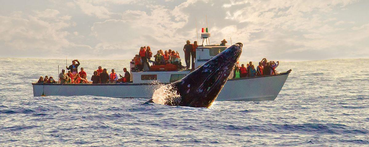 Avistamiento de Ballenas Baja California